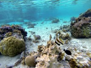 jardin de corail tahaa